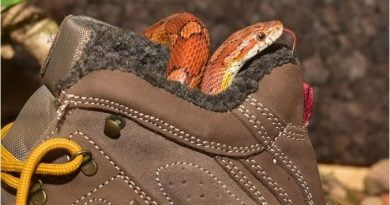 The Shoes And The Snake, Sunnah Story