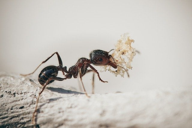 How To Keep Ants Away From Your Home